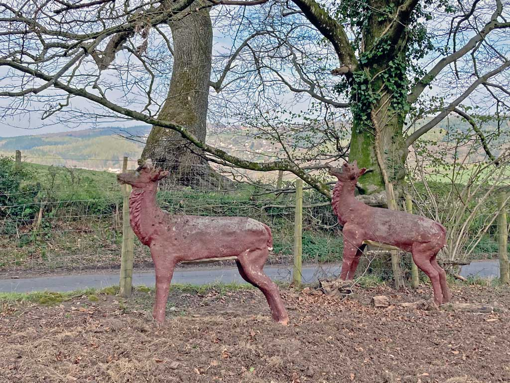 A photo of two deer on Pastors Hill