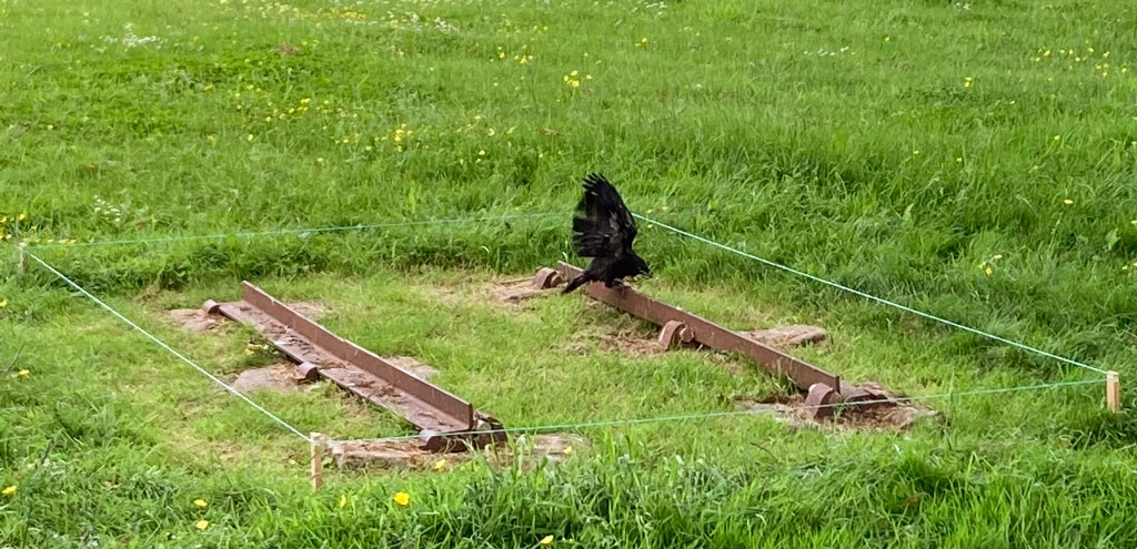 A photo of a rook on the tramline.